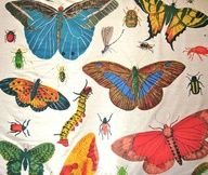 Design Legacy - several pics of butterfly fabric