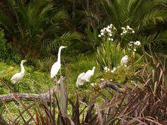 Whitford Bird Garden - appointment necessary Auckland, Animal Rescue, Bird, Garden, Artist, Animals, Ideas, Animales, Animaux