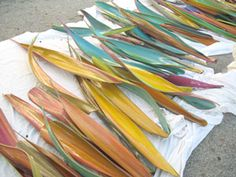 Palm seed pods...color ideas