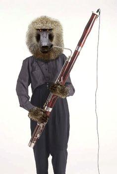 Baboon with a bassoon