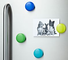 non-magnetic but it sticks to the stainless steel and will let you clip your different clippings/pictures. Lulalu Click Clip in 4 Pack Set of Cool Colors