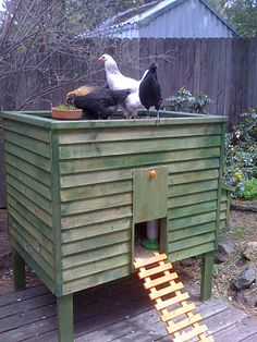 Coop & Chickens