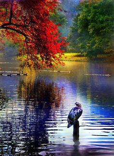 Quiet autumn morning | Lodz, Poland | © Andrzej Bochenski