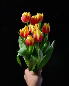 Tulip Flower Photos, Flower Images, Garden Guide, Garden Tools, Small Gardens, Outdoor Gardens, Organic Gardening, Gardening Tips, Marker