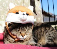 今年は戌年!猫年はいつだろうねぇ🐶  #おびちゃん #猫 #ねこ#ねこすたぐらむ #にゃんこ #にゃんすたぐらむ #にゃじら #ねこのいる生活 #ぺっと #cat #catstagram #pet #ilovemypet #きじとら猫 #キジトラ #キジトラ部  #かわいい #cute #もふもふ #猫好きさんと繋がりたい #うちのこ #にゃんにゃん #ねこ部 #猫と暮らす #愛猫 #かぶりもの猫 #ねこのかぶりもの