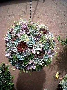 boule de plantes grasses esprit kokedama (art japonais) à utiliser en décoration
