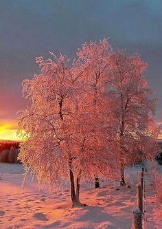 Sembra che in questo paesaggio invernale prevalgano i toni del rosa... o dei rossi molto tenui; bello scatto. #Sole