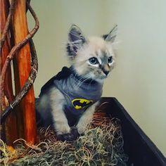 CATman geddit