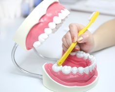 Oasis Dental & Specialist team provide tooth extractions & wisdom teeth removal when the tooth is too damaged, decayed or infected. Tooth Extraction Aftercare, Tooth Extraction Healing, Teeth Implants, Dental Implants, Impacted Tooth, Wisdom Teeth Funny, Bone Grafting, Wisdom Teeth Removal, Tooth Pain