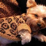 SEXY BEAST Dog Sweater - Leopard - via @Craftsy