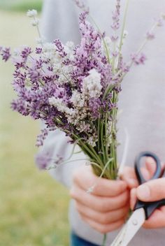 Lilac and white lavender