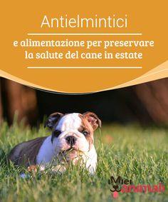 Antielmintici e alimentazione per preservare la salute del cane in estate   Gli #antielmintici e l'alimentazione sono due #aspetti da tenere molto in considerazione perché sono fondamentali per #salvaguardare la salute del vostro cane. #Salute