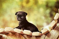 #Pugpuppy  #pugphoto #dogphotography #petphotography #dogphotographer Photography Portfolio, Animal Photography, Pug Photos, Dog Lovers, Dogs, Nature Photography, Pet Dogs, Animal Pictures, Doggies