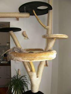 Škrabadlá a mačacie stromy, mačka, mačičky, fotogaléria mačacie stromy
