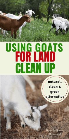 Using Goats for Land Clean Up. It is a great natural, clean, and green alternative to yard & land management. Raising Farm Animals, Raising Goats, Keeping Goats, Backyard Farming, Chickens Backyard, Goat Shelter, Goat Pen, Goat Care, Future Farms