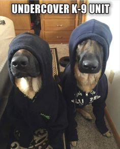 We're undercover --- too cute!