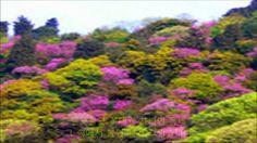 Spring Time Korea Youtube 5