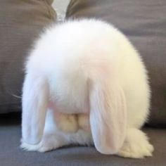 Find images and videos about cute, animal and bunny on We Heart It - the app to get lost in what you love. Cute Little Animals, Cute Funny Animals, Cute Cats, Cute Disney Wallpaper, Cute Cartoon Wallpapers, Cute Baby Bunnies, Cute Babies, Snowball Rabbit, Cute Bunny Cartoon