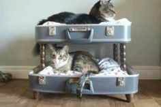wooden crutches repurposed | Totally cool cat repurpose! Living with animals https://m.facebook.com ...