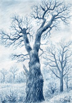 the oldest oak in Pilsen (about 500 years) West Bohemia, drawing  by Jana Haasová