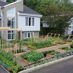 Edible front yard garden- forget useless lawn.