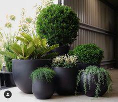 Indoor Courtyard, Indoor Garden, Indoor Plants, Potted Plants, Outdoor Planters, Outdoor Gardens, Rooftop Gardens, Balcony Garden, Garden Pots