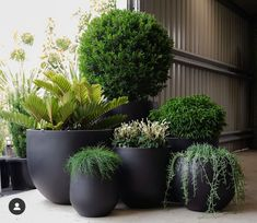 Outdoor Planters, Outdoor Gardens, Rooftop Gardens, Balcony Garden, Garden Pots, Vegetable Garden, Landscape Design, Garden Design, Minimalist Garden