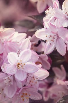 Dawn by Lilyas  #Freshblossoms