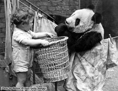 A panda discussing the problems of the day over the washing line with a young admirer, 1939 😜🐼 #History #Photography #BIZBoost 🚀