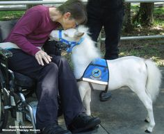 Rainbow Heart Therapy horse Sweetheart brings a little love to a hospital for patients with brain and spinal cord injuries. Gentle Carousel Miniature Therapy Horses