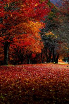 Autumn and Winter Things!