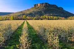 Lower Table Rock and pear orchard, Rogue Valley, Oregon Wonderful Places, Great Places, Places To Visit, Oregon Vacation, Vacation Trips, Oregon Nature, Table Rock, Pacific Northwest, Scenery