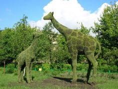 Grass Giraffe