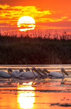 Danube Delta | Romania Romania Facts, Danube Delta, Transylvania Romania, Visit Romania, Romania Travel, Tour Around The World, Bucharest Romania, Travel Tours, Summer Travel