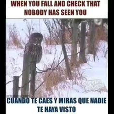 Funny Spanish Lesson- When you fall and look around - Funny Memes Funny Birds, Cute Funny Animals, Spanish Humor, Funny Spanish, Lindos Videos, Tv Memes, Animal Antics, Text Features, Animal Totems