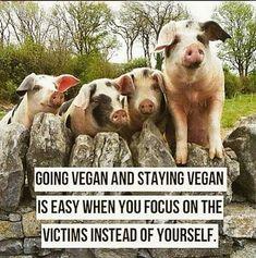 #Vegetariancooking