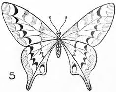 Step 06 drawing butterflies finished Butterfly Drawing Easy Methods : How to Draw Butterflies Step by Step