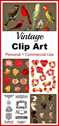 Vintage Clip Art Graphics- Beautifully restored vintage illustrations ready to be put to use in a variety of projects! You can use these antique digital design elements to create printable art, do scrapbooking, enhance your website, create stickers, embellish typography, and so much more!   antique images, birds, cardinal, bluebird, roses, flowers, nature, floral, botanical, frames, ornate, baroque, header, line divider, ducks, PNG files, 300 dpi, high-resolution clip art, graphic design