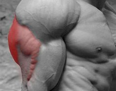 Huge Triceps Workout