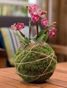 Fun And Eco-Helpful Solutions To Remodel Your Yard Kokedama String Gardening - Kokedama Kit - Japanese Moss Balls Ikebana, String Garden, Garden Crafts, Garden Art, Garden Design, Succulent Planters, Succulents Garden, Fence Garden, Fence Art