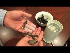 Making Eggshell & Banana Peel Tomato Fertilizer: Blossom End Rot - The Rusted Garden 2013