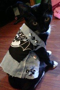 23 Pictures That Prove Punks Are Actually Total Softies - I just want one of these for my cats....