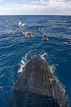 Top 10 of the Dominican Republic - Whale Watching ~ #Caribbean #attractions #DR