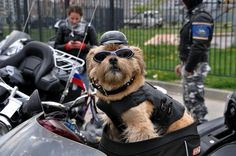 Dogs on hogs from www.bikerdogsmc.com
