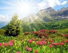 The Dolomites are great for skiing in winter, and hiking in summer… but when it comes to the combination of vibrant greenery, beautiful flowers, and just a trace of snow on the mountains, we love the spring! Above, wild-flowers grow in the Brenta Pass, a popular place for hikers.