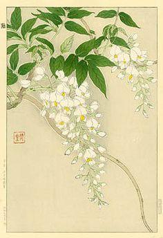 torii gallery: Wisteria, White by Kawarazaki Shodo Japanese Artwork, Japanese Painting, Japanese Prints, Chinese Painting, Chinese Art, Asian Flowers, Oriental Flowers, Chinese Flowers, Japanese Flowers