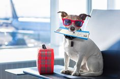 Flying with a pet isn't the easiest (or cheapest) way to travel, but we'll lay it all out for you -- and help you save time and money on your next trip.