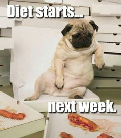 The Pug Anthem: Diet Starts Next Week while sitting on a beach chair eating pizza. LOL Gotta love it!  Pug @KD Eustaquio Sult this looks like LuLu :)