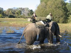 Okavango Delta, 3rd camp was the elephant rescue centre and orphanage at Abu Camp, where they re-socialise elephants back Into the wild. (208)