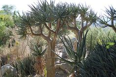 A desert scape from the Living Desert Museum in Palm Desert California.